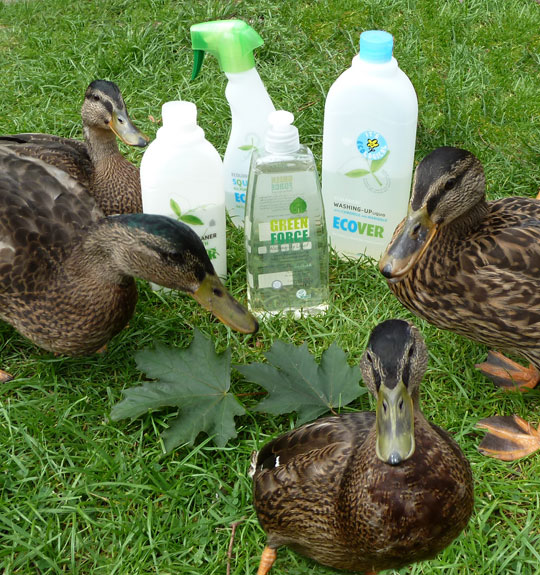 Green Policy at Elton Old Hall - Ducks